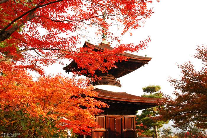 京都 常寂光寺