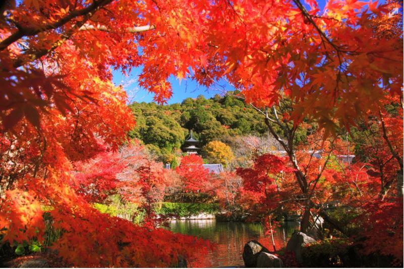 京都 永觀堂禪林寺