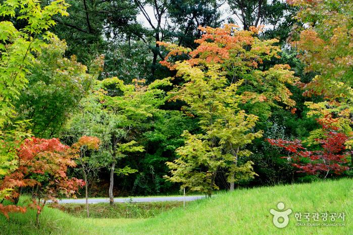 京畿道立水香樹木園